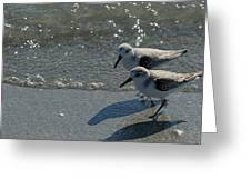 Sandpiper 5 Greeting Card