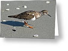 Sandpiper 9 Greeting Card
