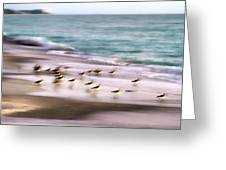 Sandpiper Evening Greeting Card