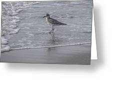 Sandpiper On The Shoreline Greeting Card