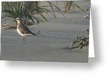Sandpiper Stroll Greeting Card