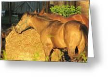 Sandy Eating Hay Greeting Card