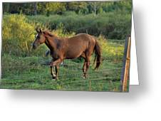 Sandy The Roan - C0058b Greeting Card