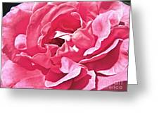 Sandys Pink Rose Frills Greeting Card