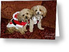 Santa Puppies Greeting Card