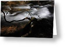 Sappling Growing By The Stream Greeting Card