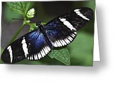 Sara Longwing Greeting Card