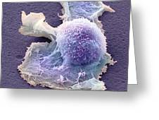 Sarcoma Cell, Sem Greeting Card
