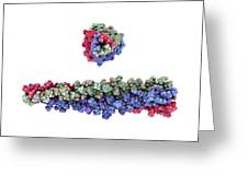 Sars Virus Surface Protein, Artwork Greeting Card