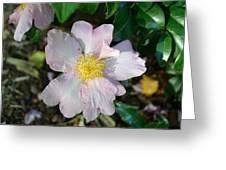 Sasanqua In Pink Greeting Card