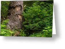 Sasquatch Rubbing Tree Greeting Card
