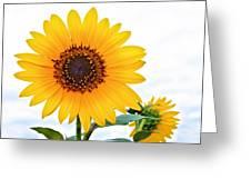 Sassy Sunflower Greeting Card