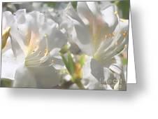 Satin White Azaleas Greeting Card