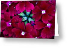 Scarlet Bouquet  Greeting Card