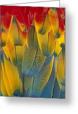 Scarlet Macaw Ara Macao Close-up Greeting Card