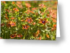 Scarlet Pimpernel Greeting Card