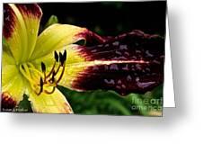 Scarlet Pimpernel Greeting Card