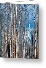 Scarred Pines Yellowstone Greeting Card by Steve Gadomski