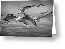 Sea Gull Scavengers Greeting Card