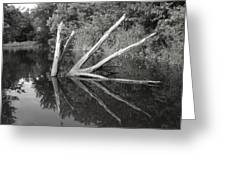 Scenes From The Kayak    Downed Trees Of The Ec River Back Waters Greeting Card by Artist Orange