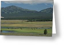 Scenic Wyoming Landscape With Grazing Greeting Card