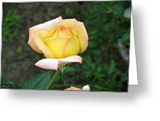 Scent Of A Rosebud Greeting Card
