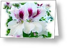 Scented Geraniums 2 Greeting Card