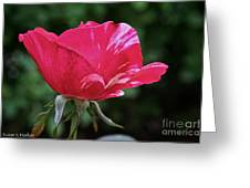 Scentimental Pink Greeting Card