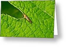 Scorpion Fly Nosing Around Greeting Card