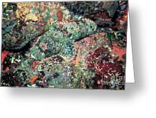 Scorpionfish Greeting Card