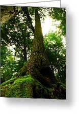 Screaming Tree Greeting Card by Kamil Swiatek