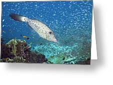 Scribbled Filefish Greeting Card