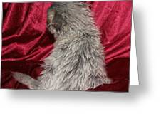 Scruffy Fold 2011 1 Greeting Card