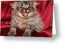 Scruffy Fold 2011 2 Greeting Card
