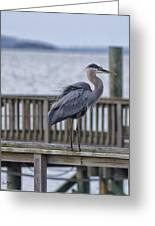 Scruffy Heron Greeting Card