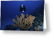 Scuba Diver Swims Underwater Amongst Greeting Card