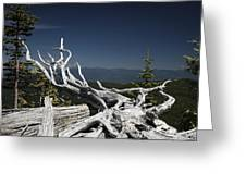 Sculpture By Mother Nature Greeting Card