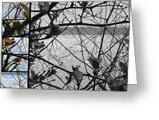Sea Beyond The Branches Greeting Card