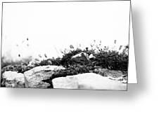 Sea Campion Wall Greeting Card