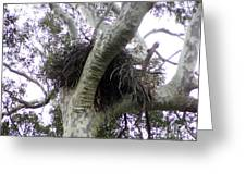 Sea Eagle Nest Greeting Card by Joanne Kocwin