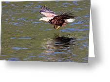 Sea Eagle's Water Landing Greeting Card