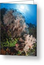 Sea Fan On Soft Coral In Raja Ampat Greeting Card