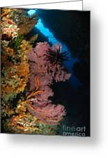 Sea Fans And Crinoid, Fiji Greeting Card