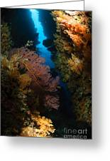 Sea Fans, Fiji Greeting Card