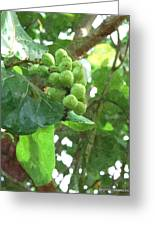 Sea Grape Sgwc Greeting Card