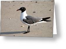 Sea Gull Posing For The Camera Greeting Card