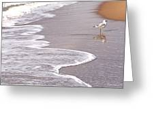 Sea Gull Reflection Greeting Card by Cindy Lee Longhini