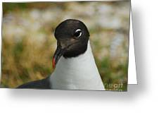 Sea Gull Greeting Card