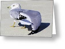 Sea Gull Stretching It Out Greeting Card
