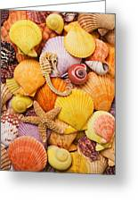 Sea Horse Starfish And Seashells  Greeting Card by Garry Gay